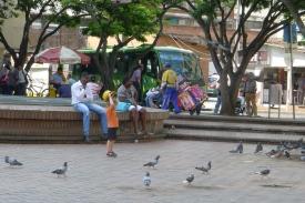 CALI / Place aux Pigeons